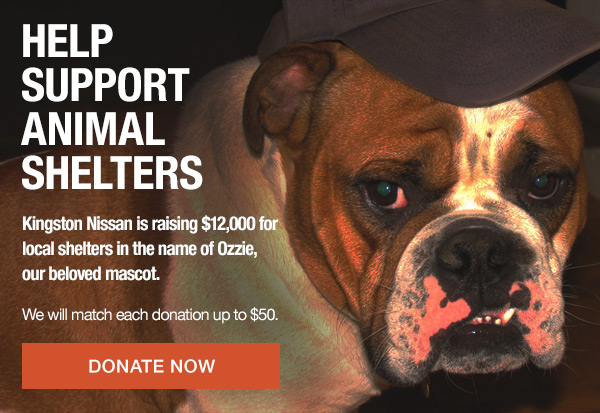 Kingston Nissan is raising money for local shelters in the name of Ozzie, our beloved mascot.